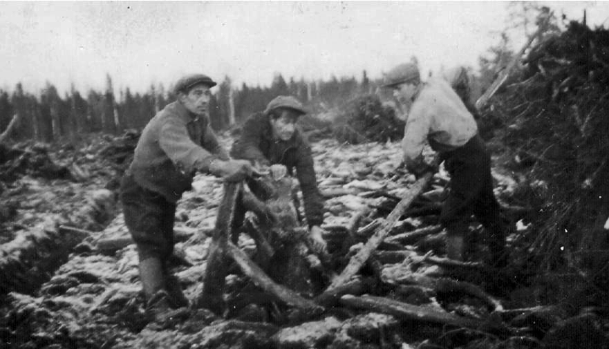 Vilho, Toivo ja Matti raivaamassa peltoa Hiekka-aholla 1938