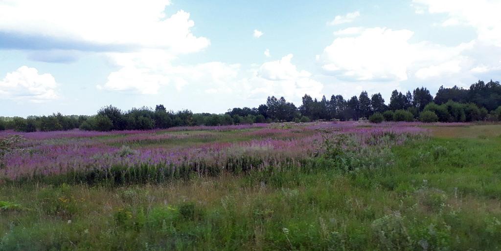 Luonto valtaa Siiranmäen peltovainioita